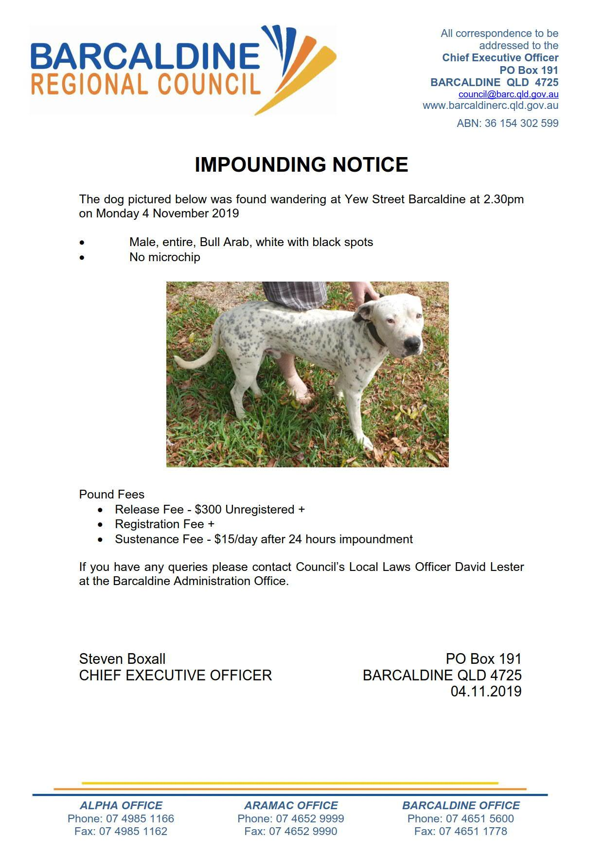 Impound notice - male, entire, white with black spots Bull Arab impounded in Barcaldine